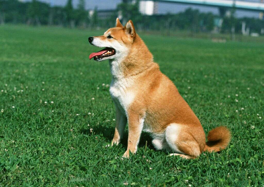 狗的种类傹.���/_这是啥狗品种