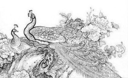 求一副好看的孔雀开屏素描画