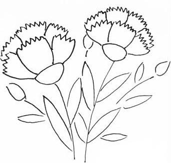怎么画康乃馨 自己用铅笔画的