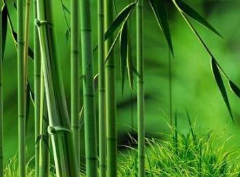 竹子破开里面的水能喝吗
