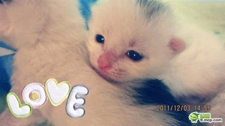 求超高清可爱小猫图片