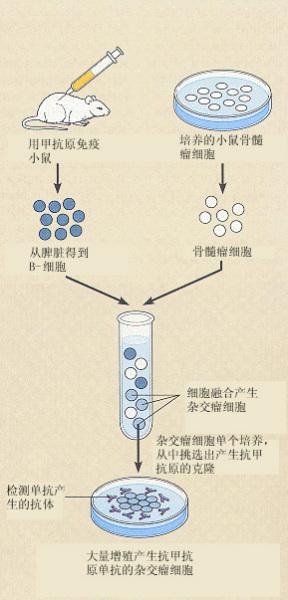 动物细胞融合的方法原理