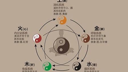 中医的五脏六腑究竟是什么?的头图