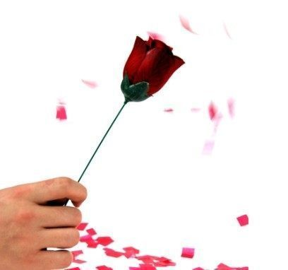一个手拿一枝花的高清背景图 看好要求再进 不少于五张最好 实在没有