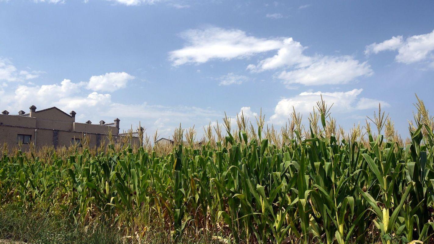 宁夏风景背景图片