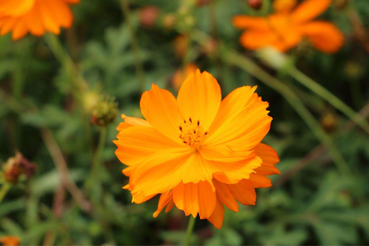 盛开的花朵图片