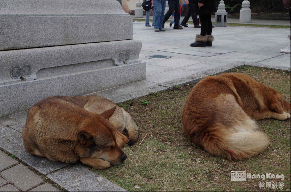睡觉的狗,完全不理游人各种调戏.图片