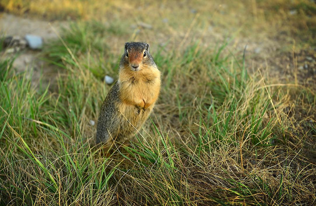 小动物,真可爱图片