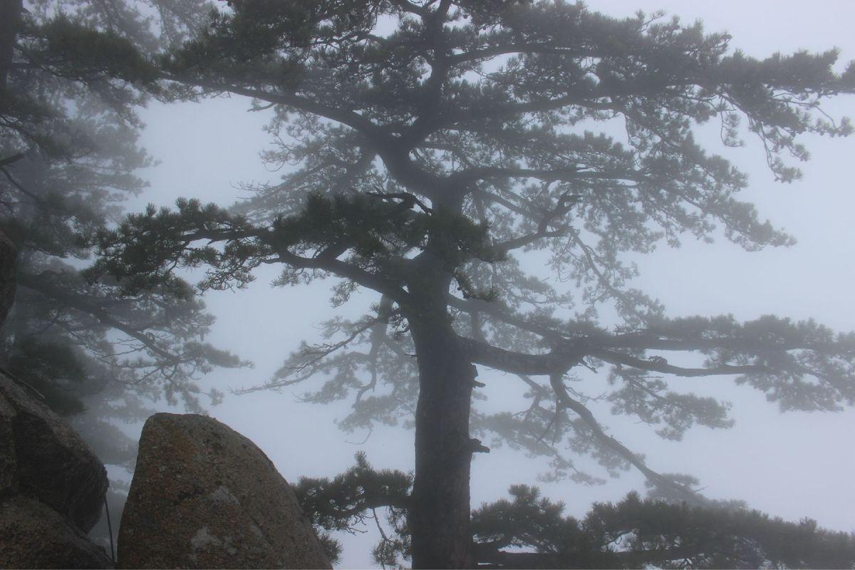 壁纸 风景 树 松 松树 1200_800