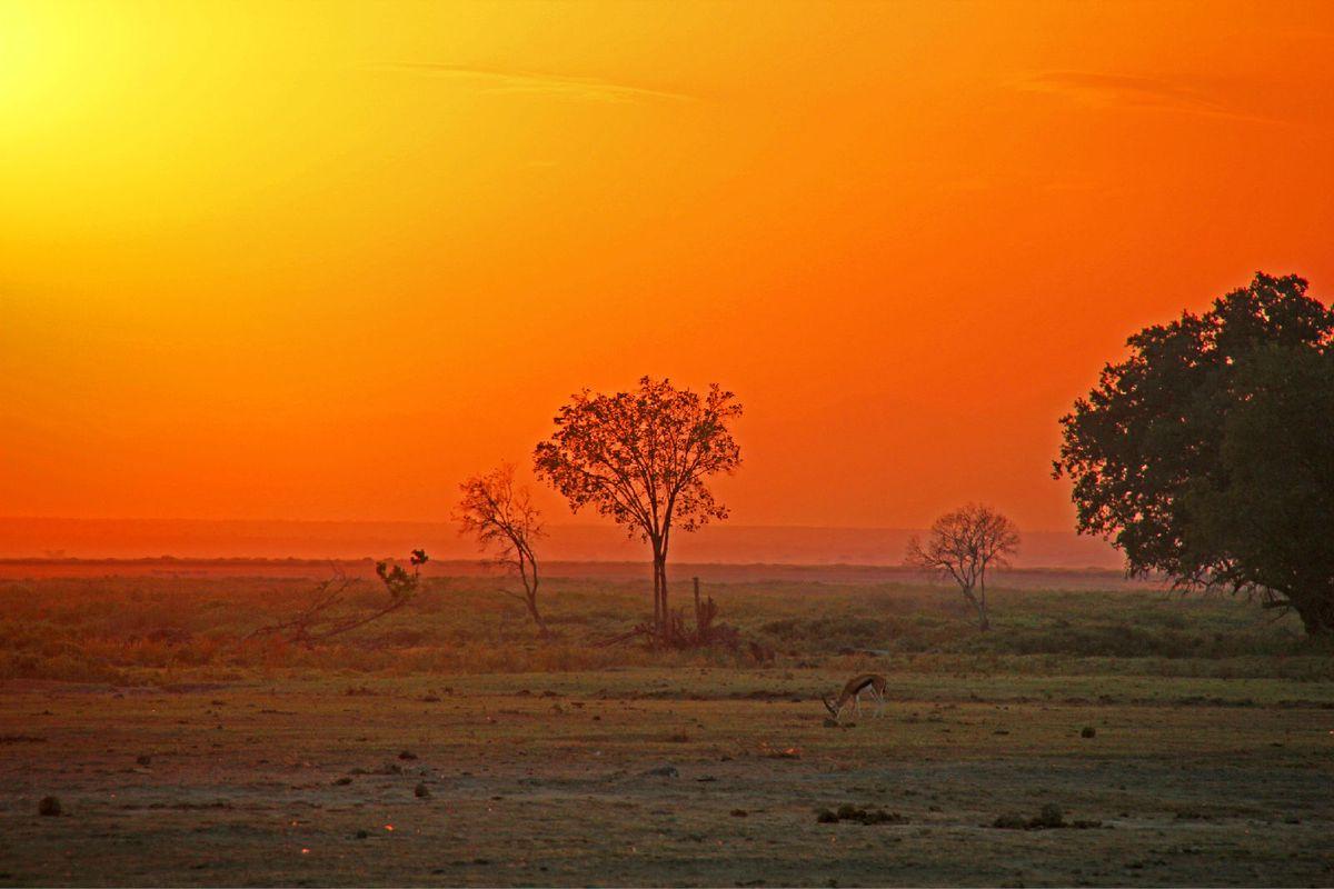 非洲的美丽的风景