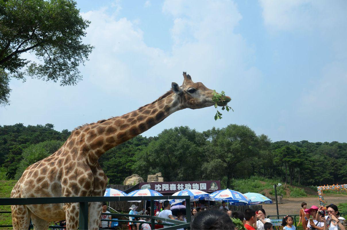 旅游开发区内,距沈阳市中心25公里,沈阳森林动物园占地面积217公顷.