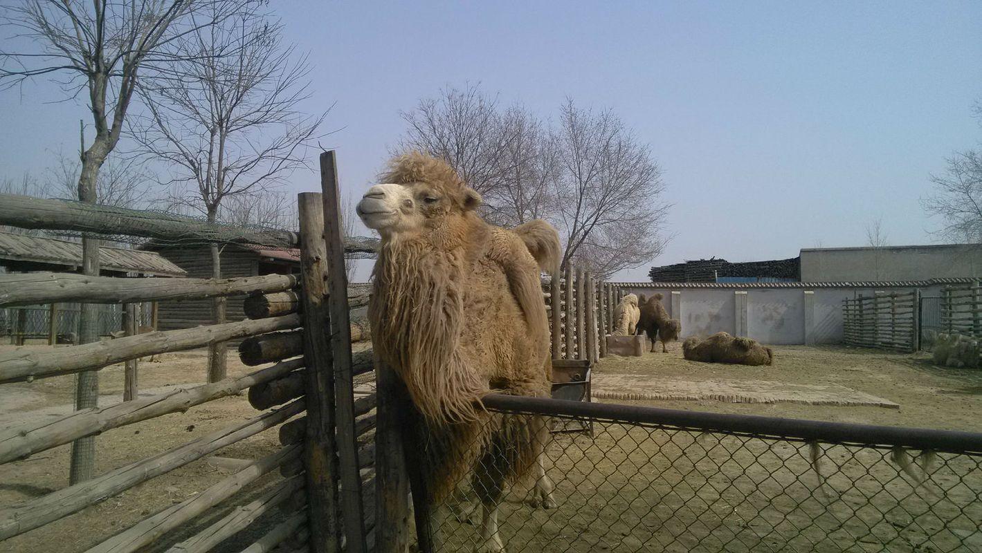 如何去太原动物园_太原动物园