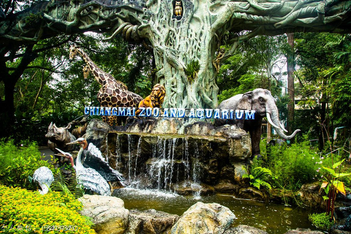 清迈动物园大门口图片