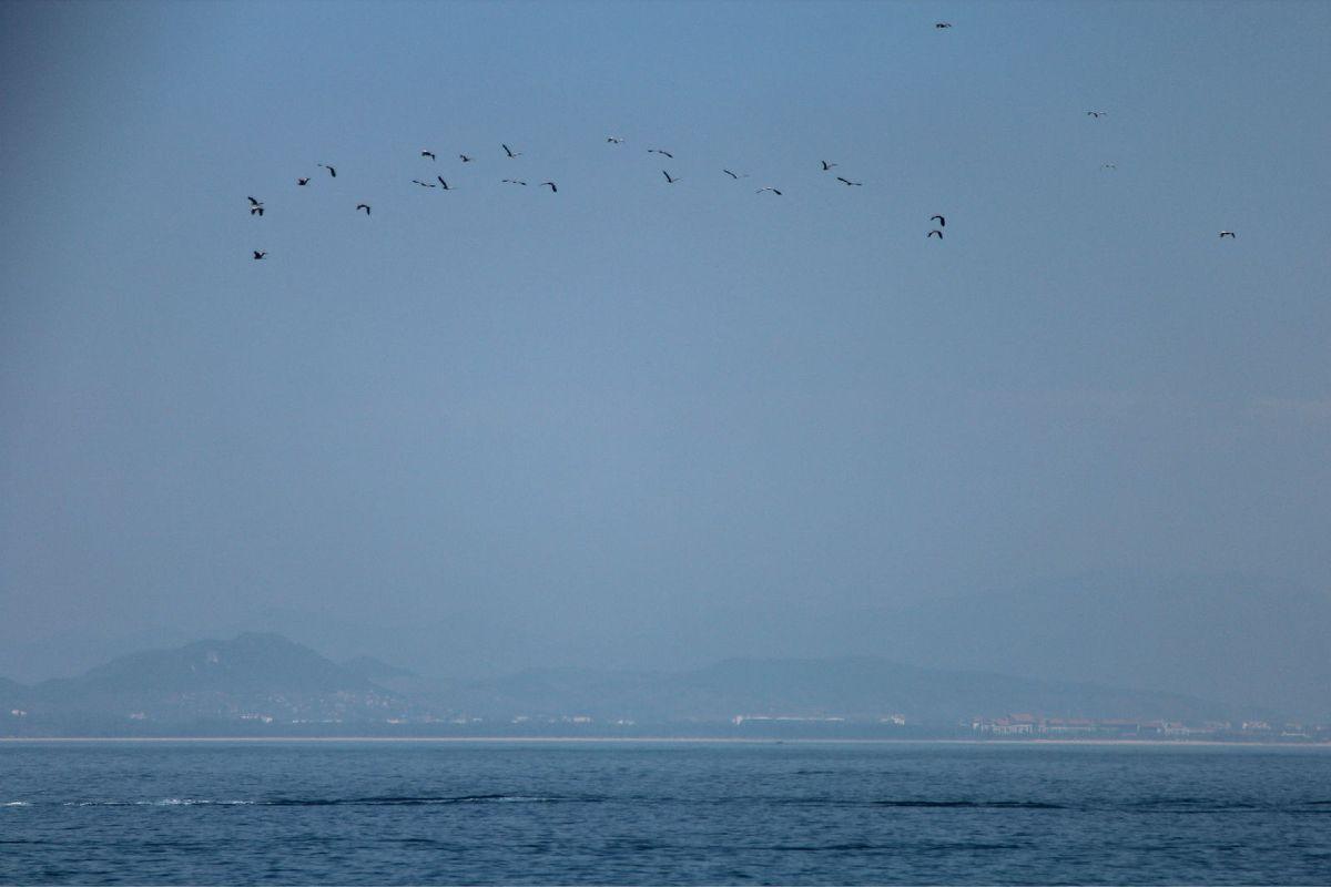 三亚海鸥风景图片