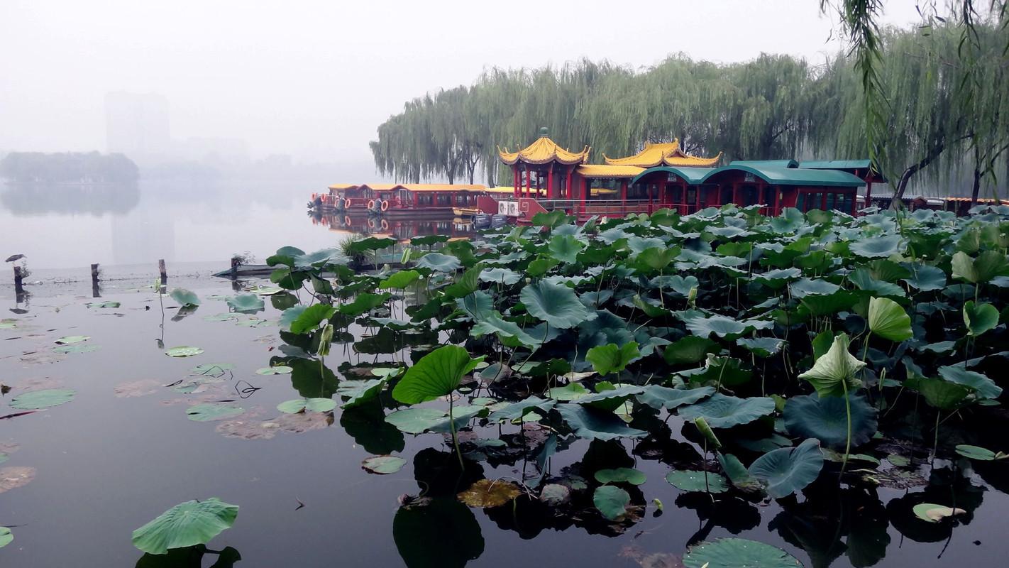 大明湖的荷花图片