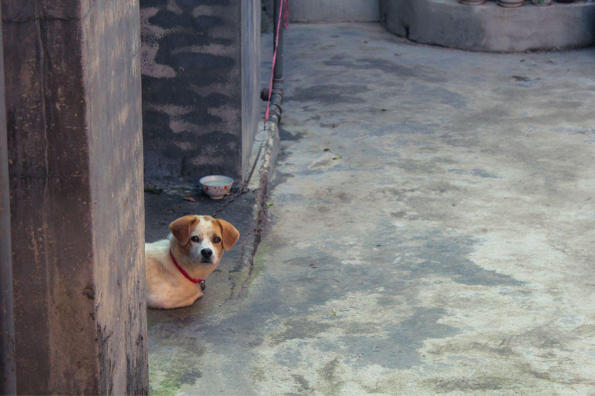 失落悲伤动物图片