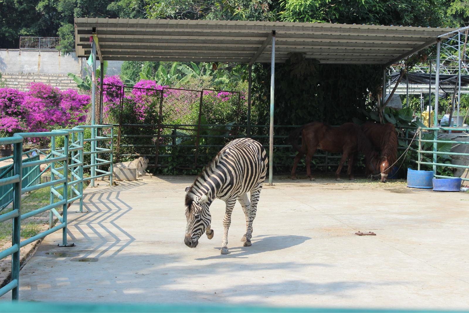 漳州动物园_漳州动物园旅游攻略_百度旅游