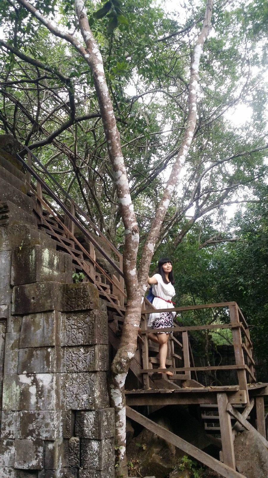 树藤缠绕在房屋四处
