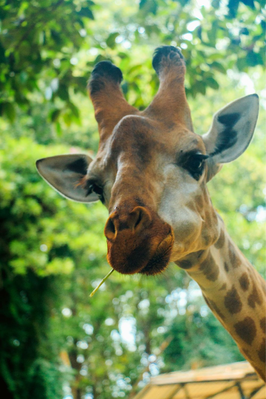 动物园wifi发射器图片