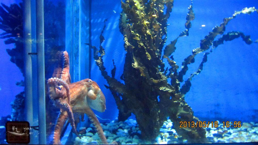 【北京】动物园 & 海洋馆