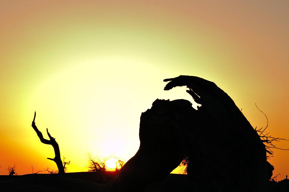 落日时分,枯树剪影像两个人在舞蹈.图片