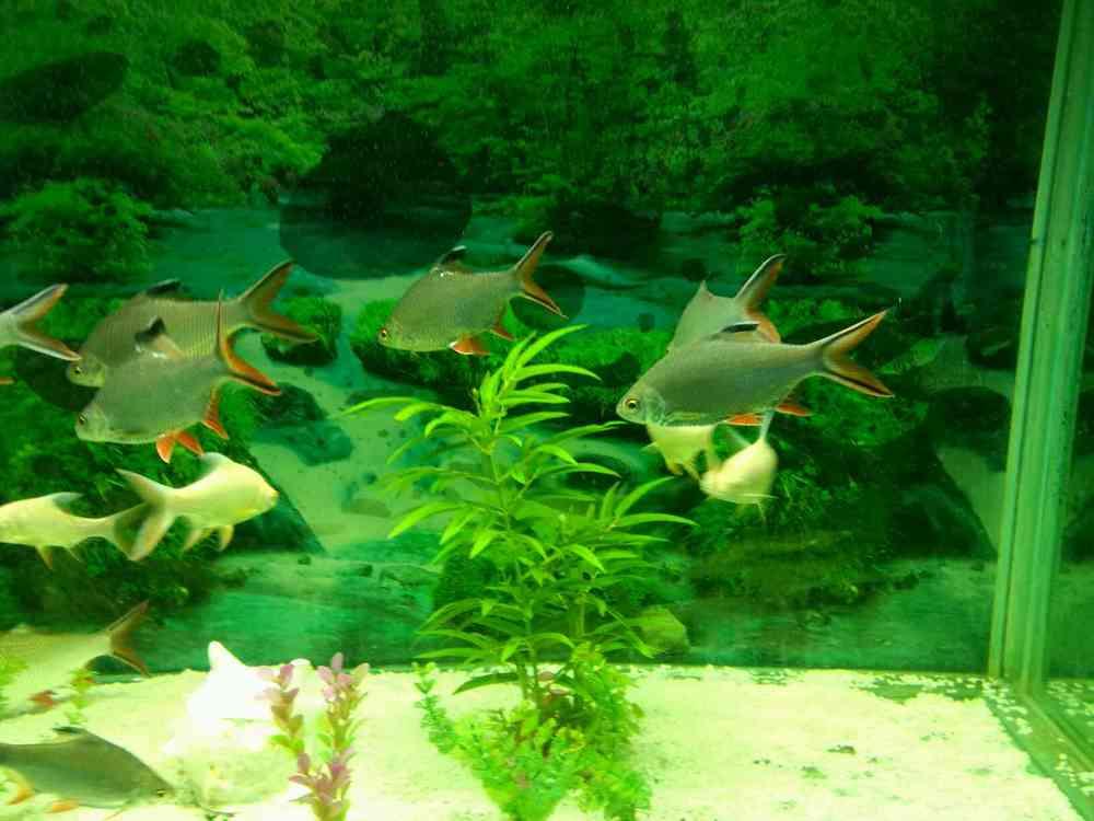 壁纸 动物 水草 水生植物 鱼 鱼类 1000_750