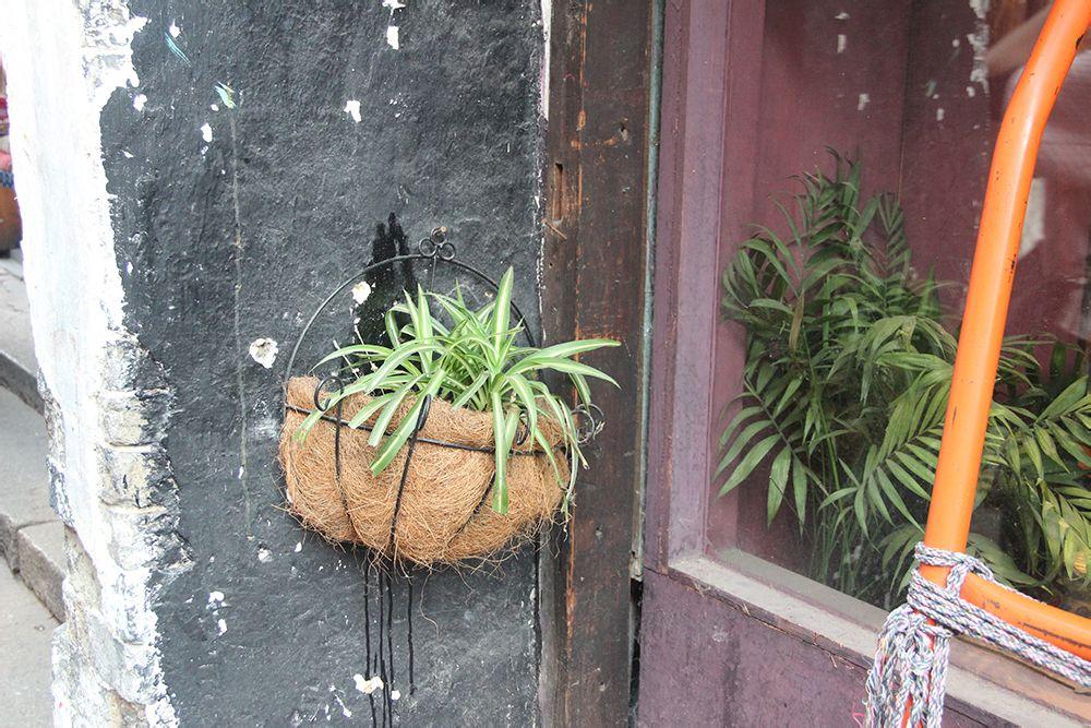 小清新的绿色植物,文艺小店的标配啊.图片