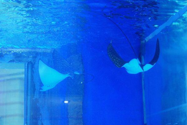 鱼缸类桌面壁纸