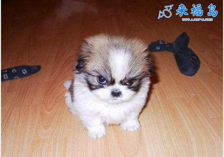 我想养一只小狗,乖巧可爱的那种,不要大狗