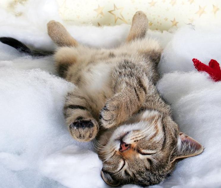 求那只猫咪倒着睡觉的图片 橙色的猫咪 很漂亮很可爱的