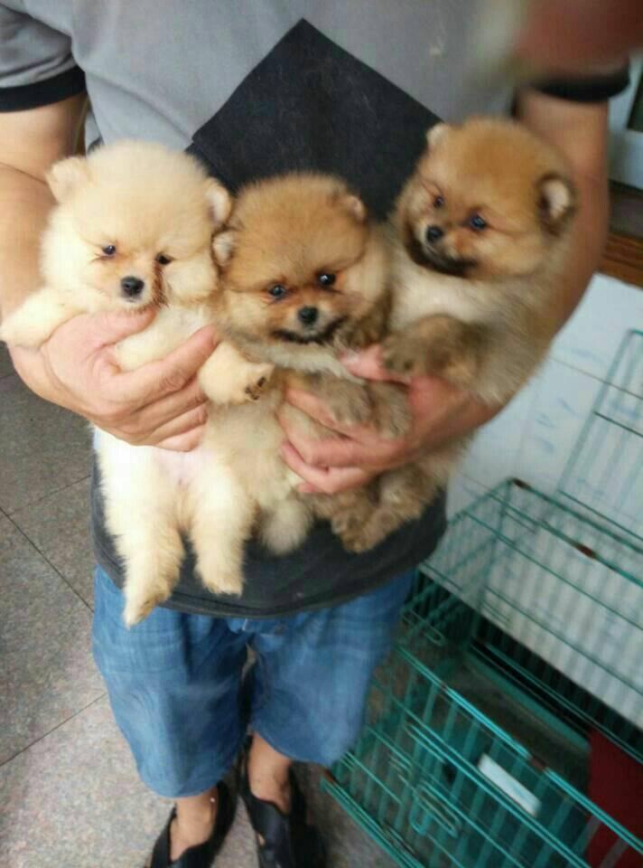 求一人抱着可爱小动物的图片,萝莉,大人都行,动物占的