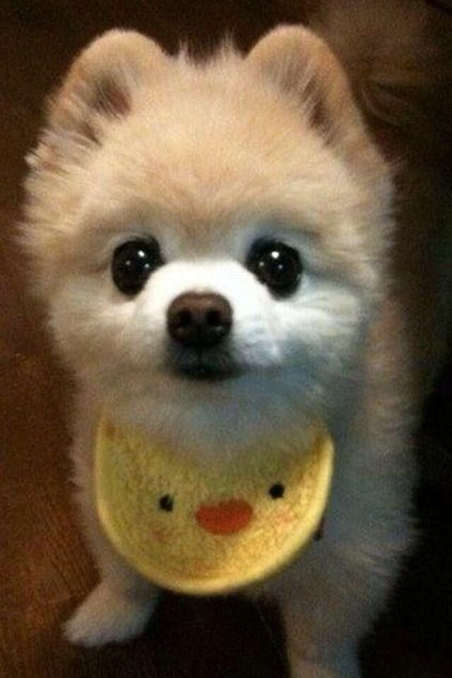 狗的种类傹.���/_这是什么品种的狗.好可爱