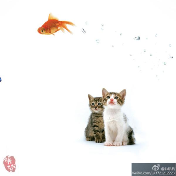 猫咪和鱼在一起的图片图片