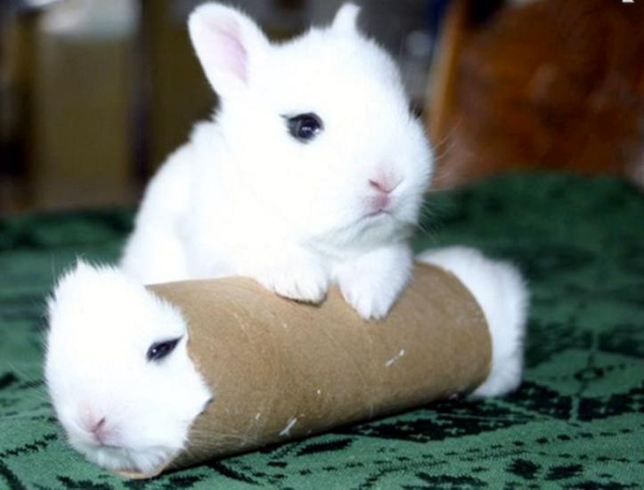 求这张两只兔子图片的高清大图,最好是壁纸级别的