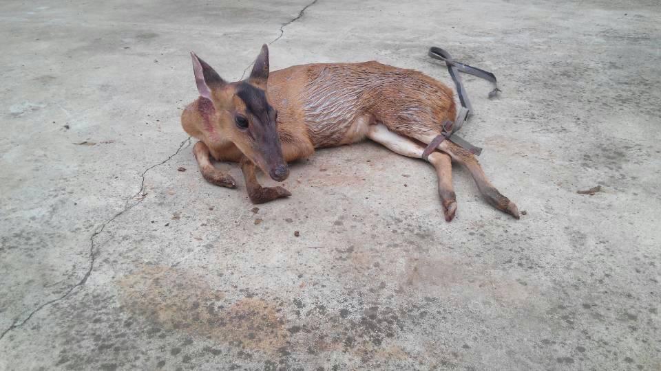 这是什么动物陕西人叫六只眼可在网上查不到学名叫什么