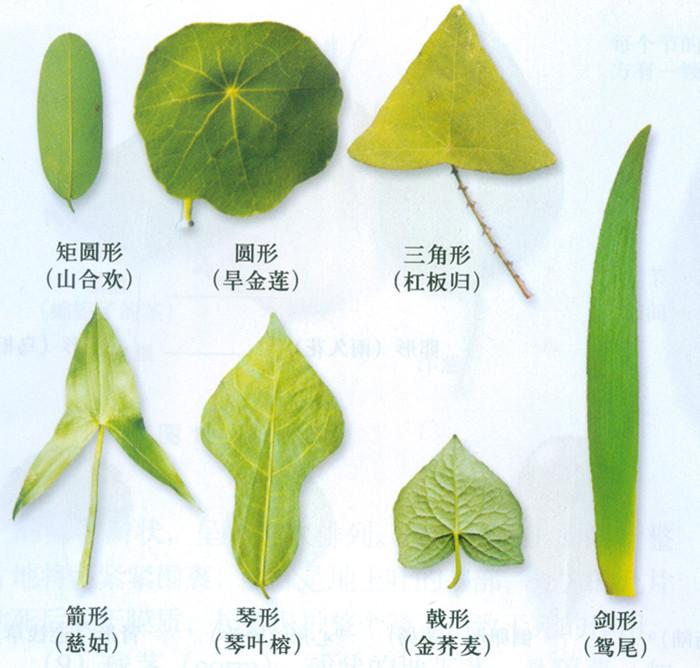 树叶针织法的图片大全