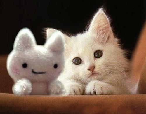 小猫咪很可爱吗?