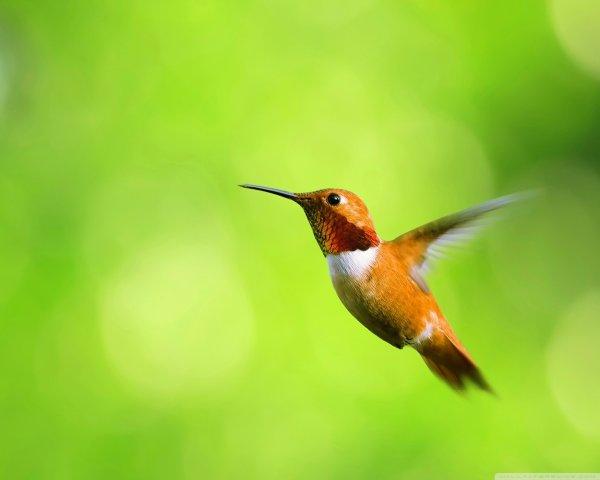 壁纸 动物 鸟 鸟类 雀 600_480