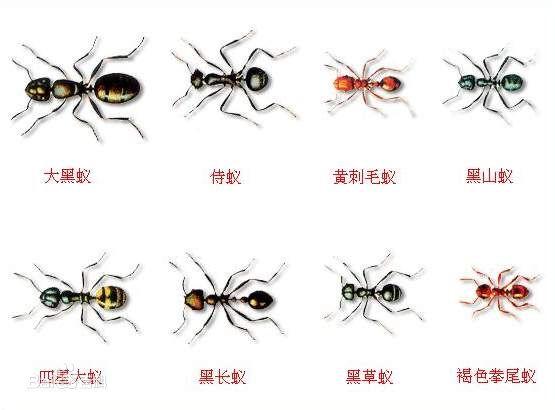 世界上有什么蚂蚁