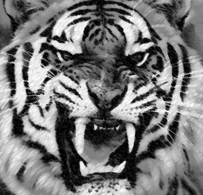 急收张正面老虎头的简单素描图片800宽左右