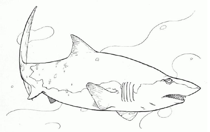 怎样画鲨鱼图片
