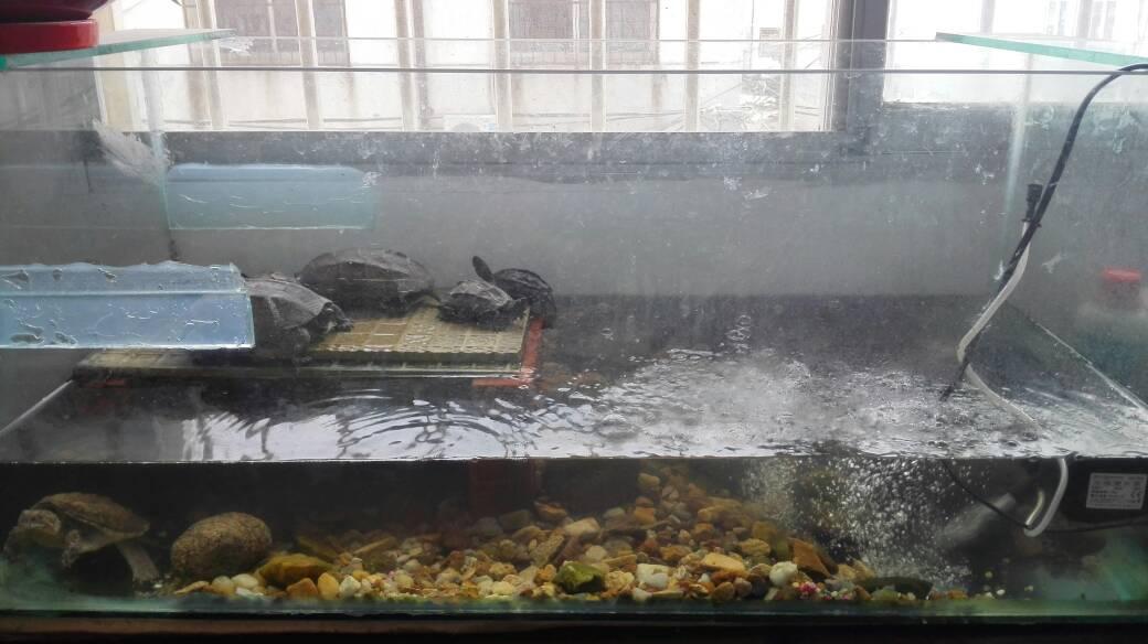 求龟缸设计图 新近 一个一米长 50宽.图片