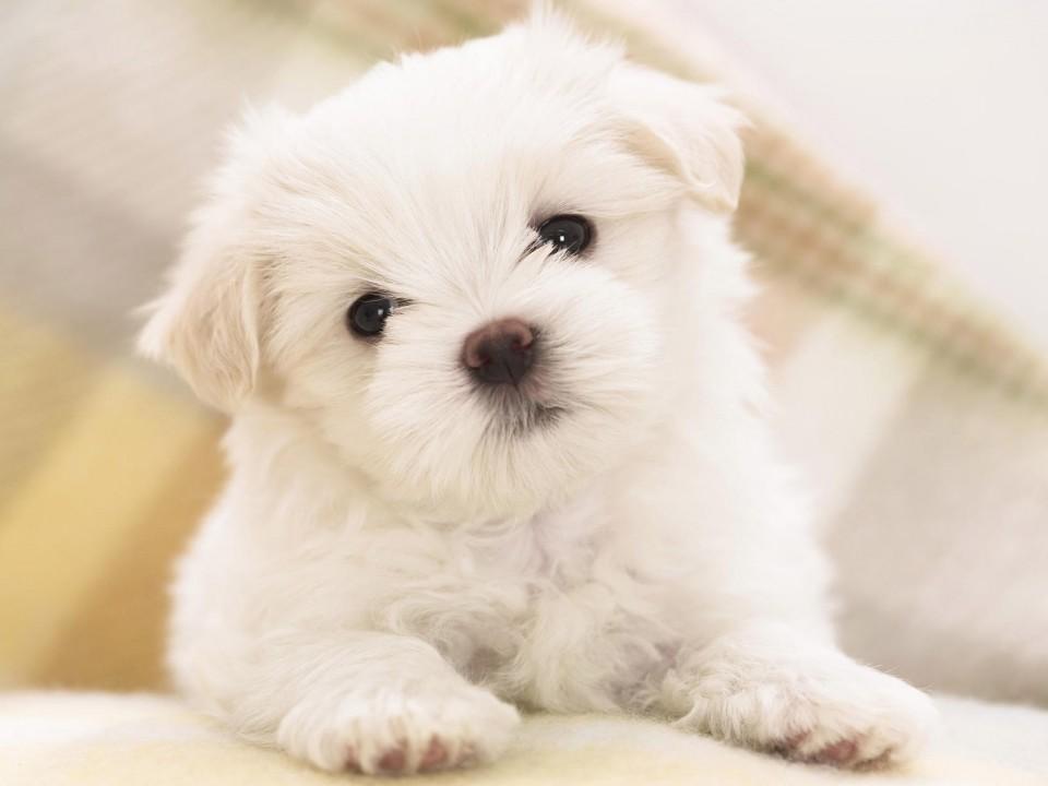 谁能给我qq头像,要可爱的,是小动物