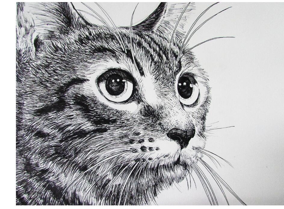 怎么画去素描猫咪图片大全
