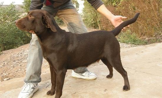 亚洲小色狗在线播放_各位懂狗的知友,帮忙看下我家狗狗是什么品种?6个月大
