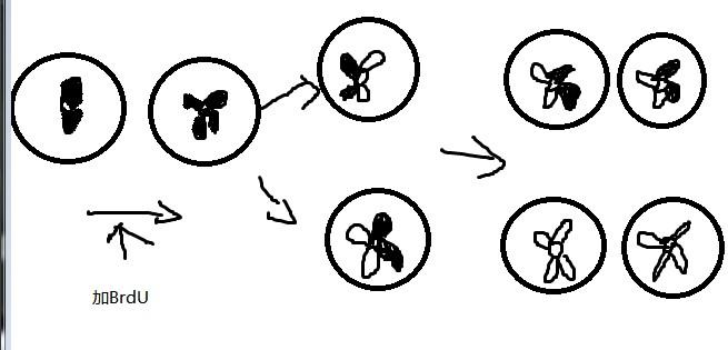基因链简笔画