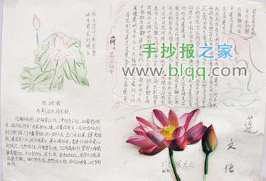 植物手抄报的照片图片
