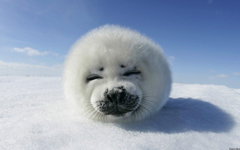 小动物很可爱,萌萌的.