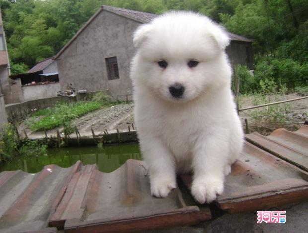 找一些可爱小狗的图片,做头像