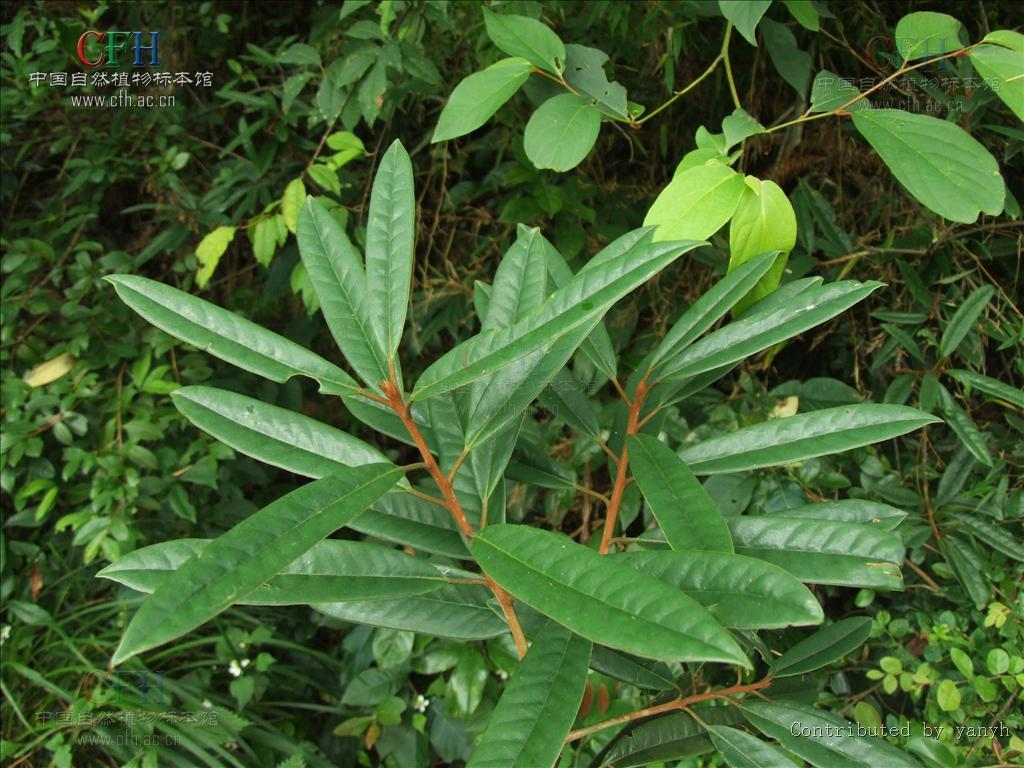 壁纸 植物 蕨类 1024_768